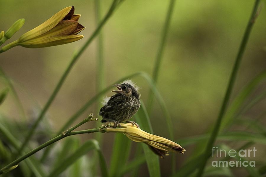 Baby Bird Photograph - Hello 1 by E Mac MacKay