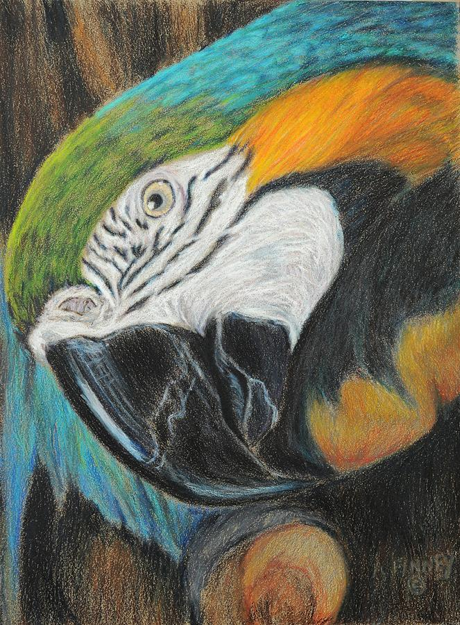 Blue And Gold Macaw Drawing - Hello by Angela Finney