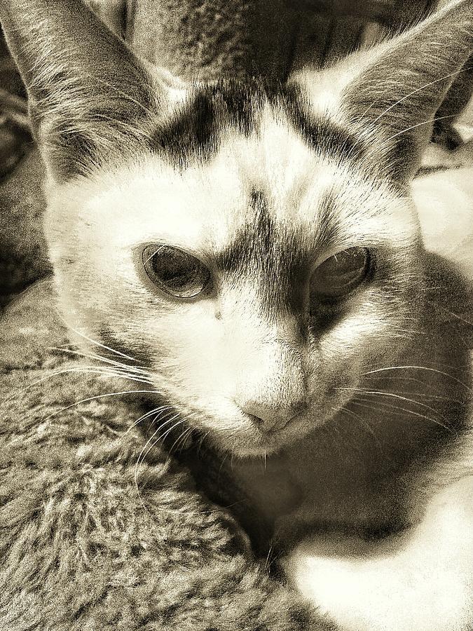 Cat Photograph - Hello Kitten by Eddie G