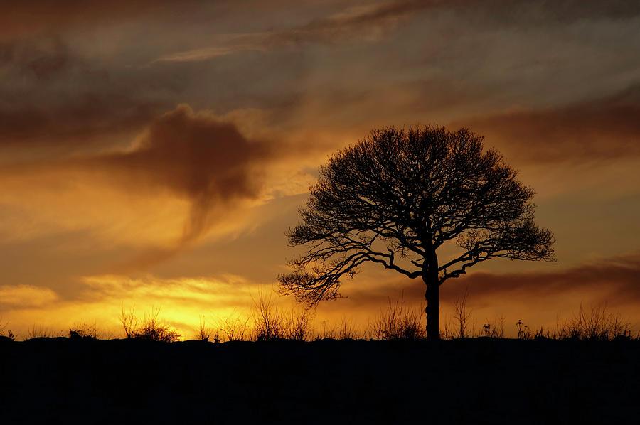Tree Photograph - Hello Old Friend by Mark Denham
