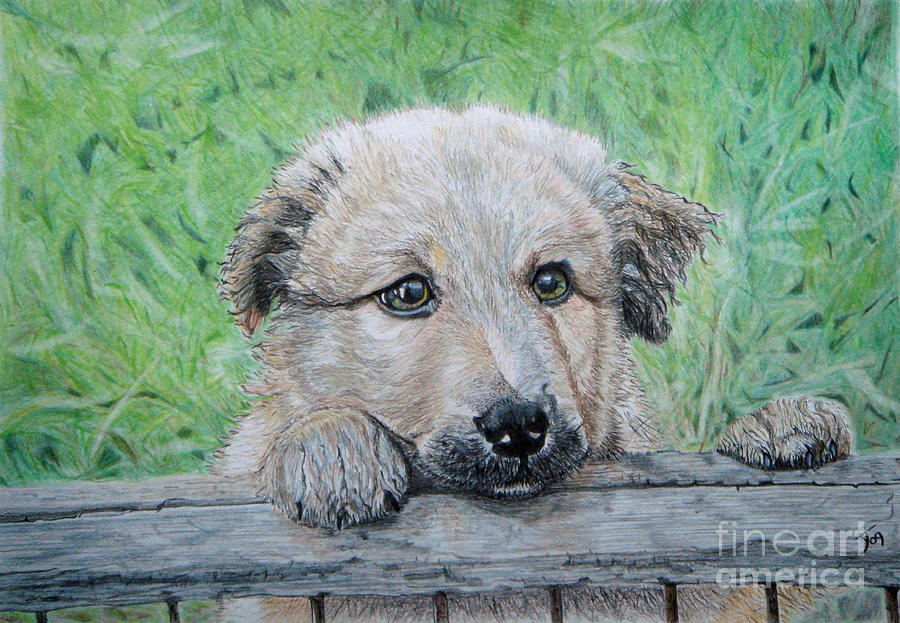 Puppy Drawing - Hello Puppy by Yvonne Johnstone