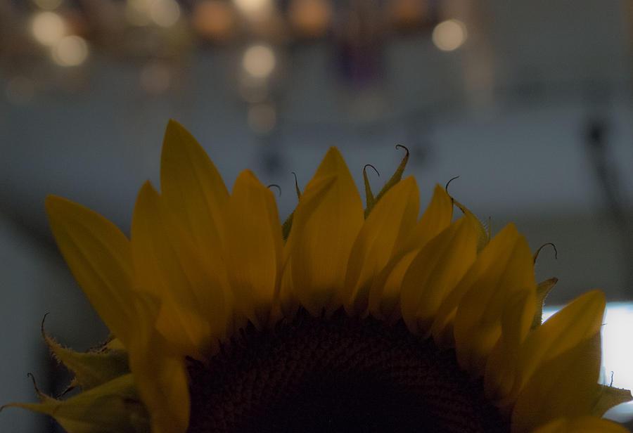 Sunflowers Photograph - Hello by Tara Miller