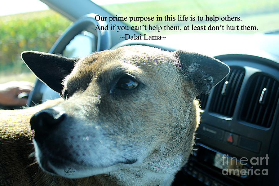 Dalai Lama Photograph - Help Others by Beauty For God