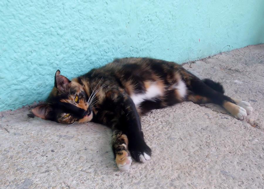 Cat Photograph - Hemingway Cat by JAMART Photography