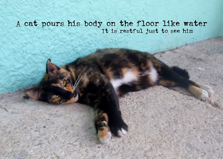 Cat Photograph - Hemingway Cat Quote by JAMART Photography
