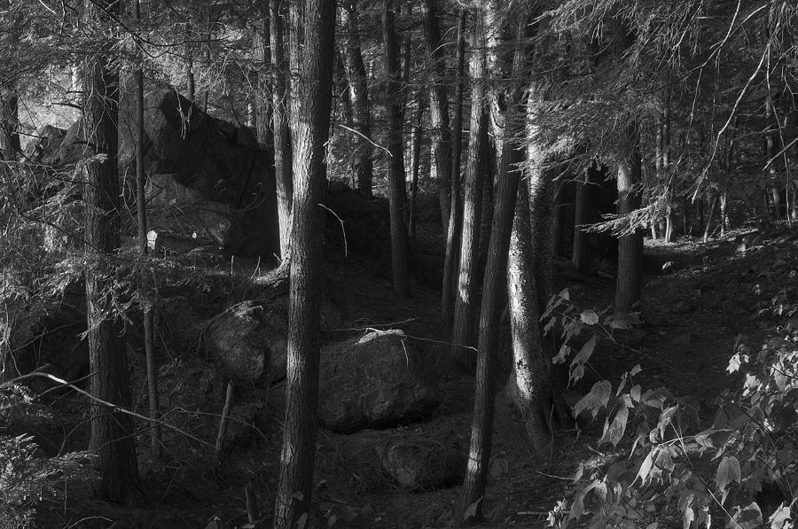 Hemlocks by Bob Grabowski