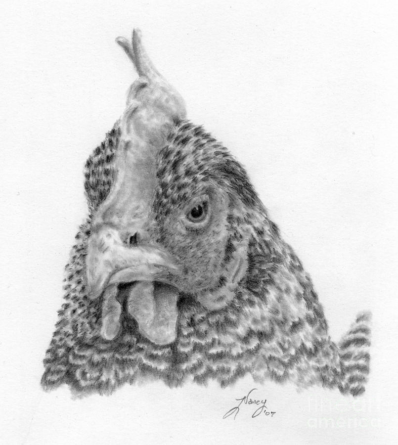 Chicken Drawing - Henny Penny by Nancy Aldrich