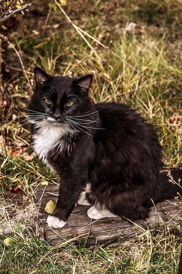 Henry The Cat Photograph
