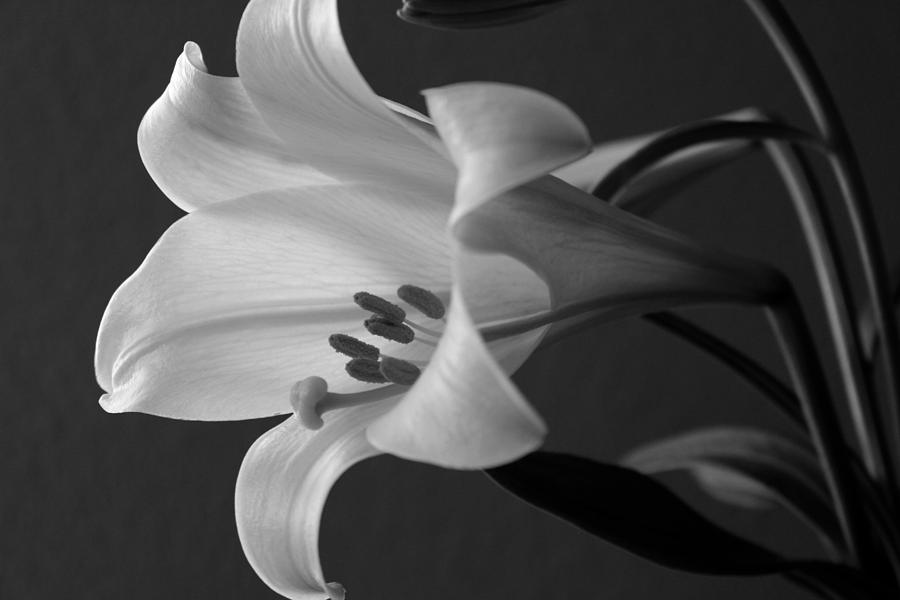 Black And White Photograph - Her Name was Lily by Colleen Cornelius