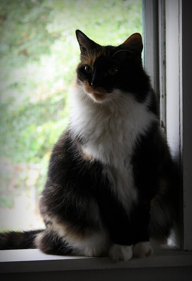 Cat Photograph - Her Window by Mandy Shupp
