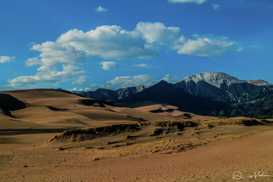 Canon 7d Mark Ii Photograph - Herard Past The Dunes by Dennis Dempsie