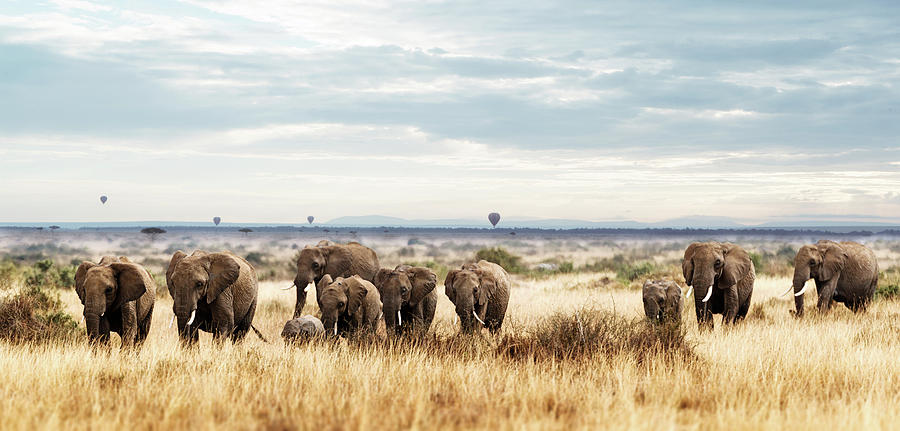 Elephant Photograph - Herd Of Elephant In Kenya Africa by Susan Schmitz