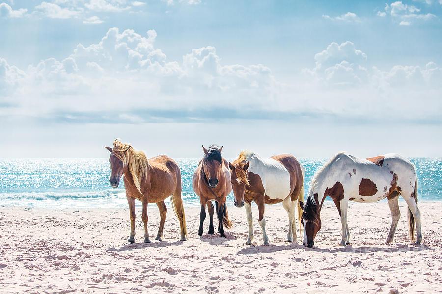 Horse Photograph - Herd of Horses on Beach by Anna Smolens
