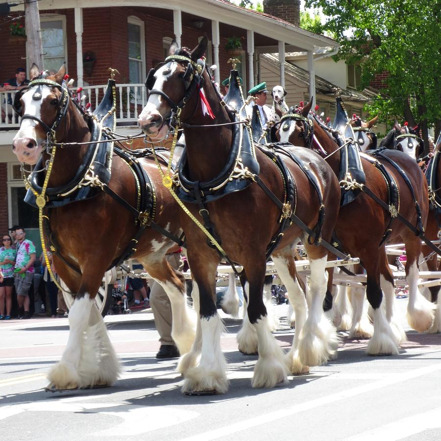 Here Comes the Clydesdales by Wendy S Beatty