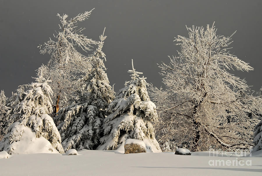 Winter Photograph - Here Comes The Sun by Lois Bryan