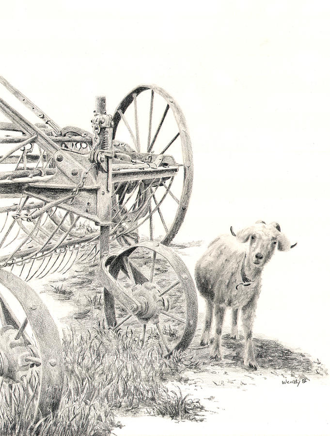 Goat Drawing - Here Comes Trouble by Wendy Mould