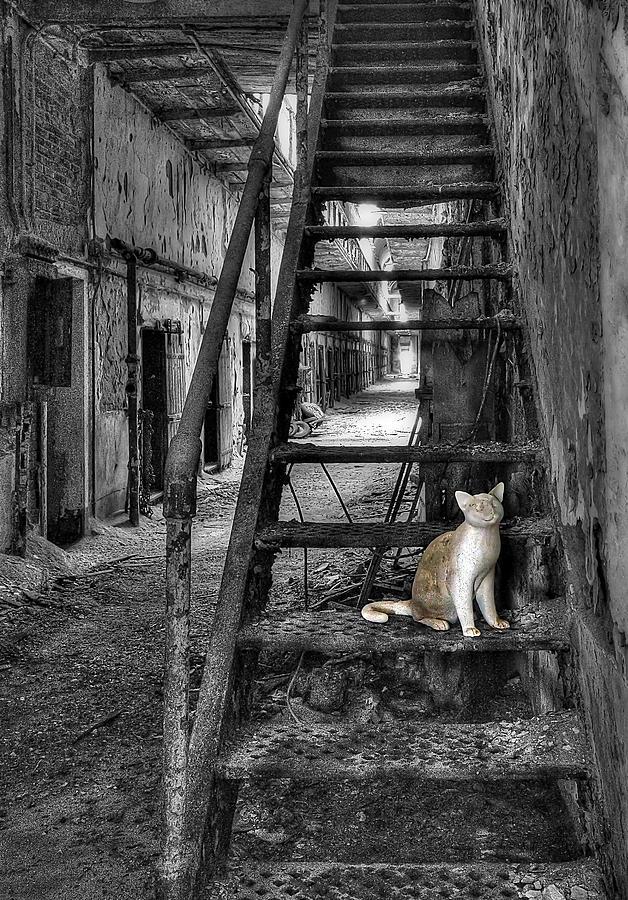 Abandoned Photograph - Here Kitty Kitty Kitty... by Evelina Kremsdorf