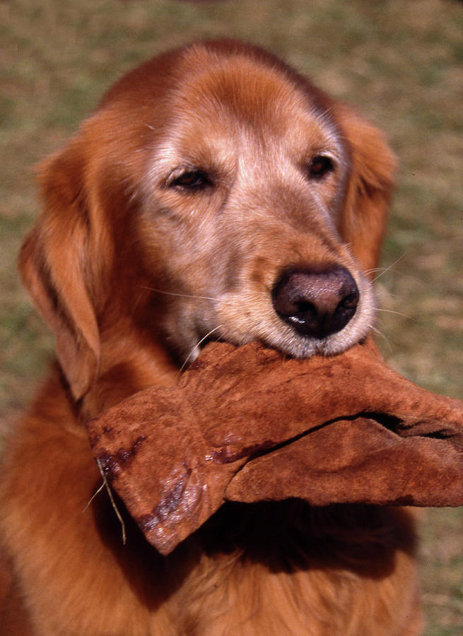 Dog Photograph - Here To Serve by Skip Willits