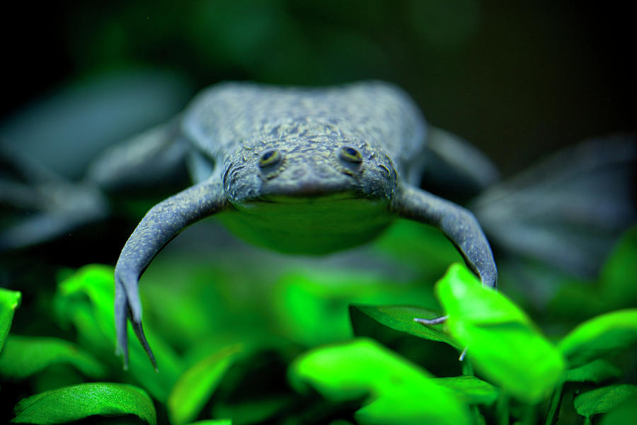 Frog Photograph - Heres Looking At You by Christina Durity