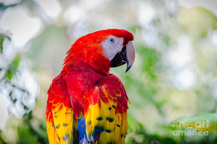 Macaw Photograph - Heres Looking At You by Emily Bristor