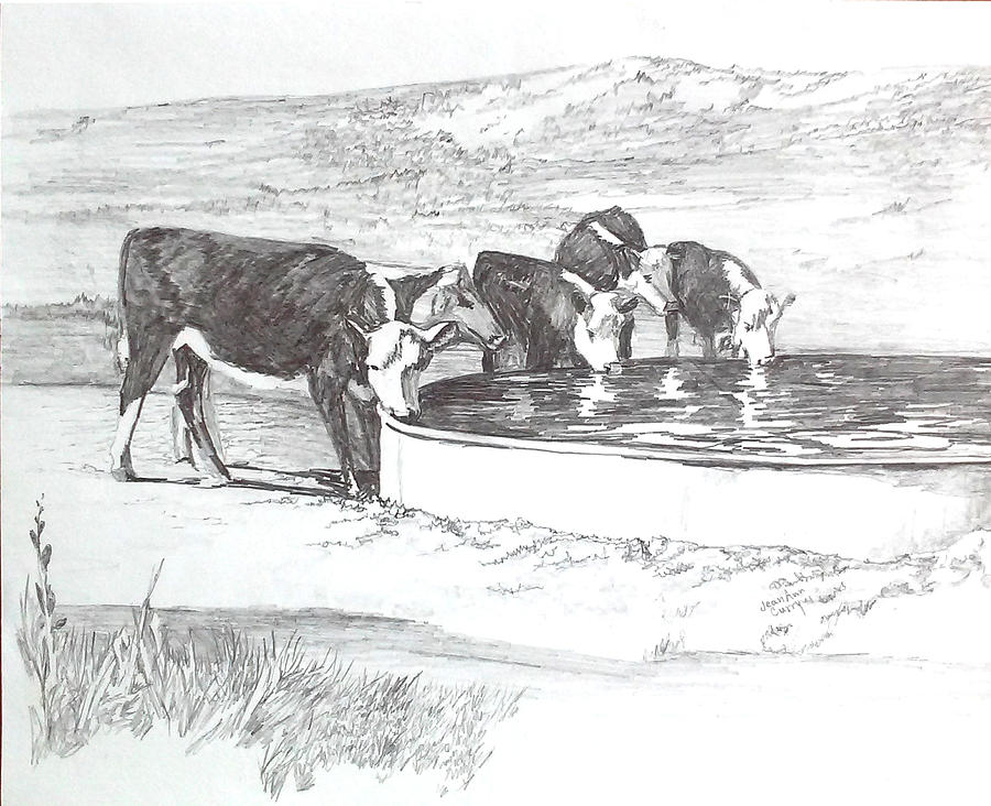 Cattle Drawing - Herfords At The Water Tank by Jean Ann Curry Hess