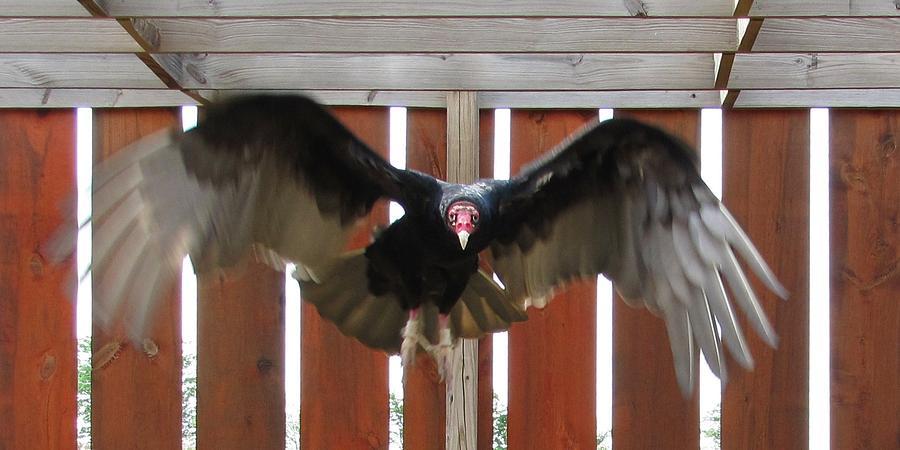 Herman Munster in flight by Keith Stokes