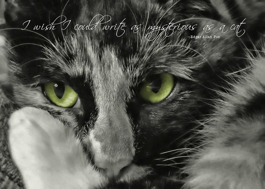 Cat Photograph - Hermione Quote by JAMART Photography