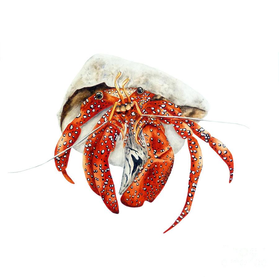 Hermit Crab Painting by Marie Burke Hermit Crab Art