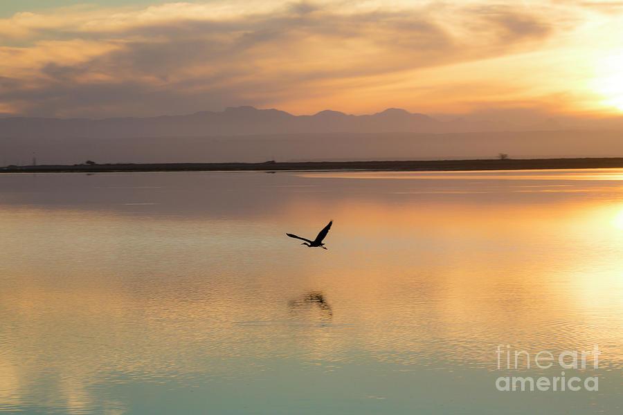 Heron Photograph - Heron At Sunset by Sheila Smart Fine Art Photography