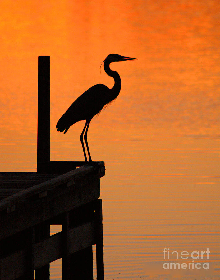 Clay Photograph - Heron At Sunset by Clayton Bruster