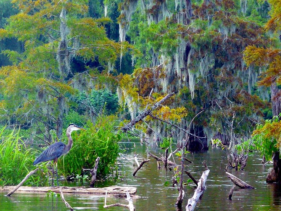 Blue Heron Photograph - Heron Blues by Rdr Creative