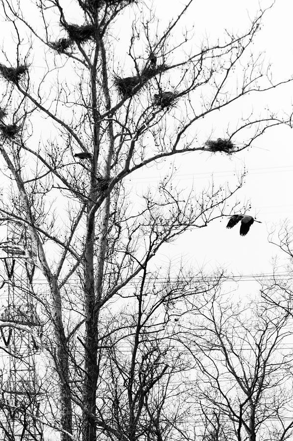 Heron Photograph - Heron by Ed Lumbert
