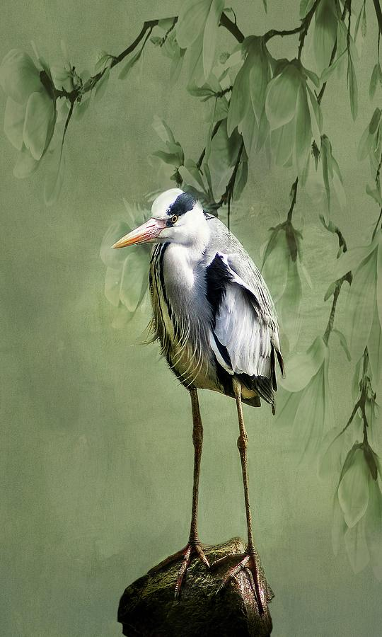 Heron Egret Bird by Movie Poster Prints