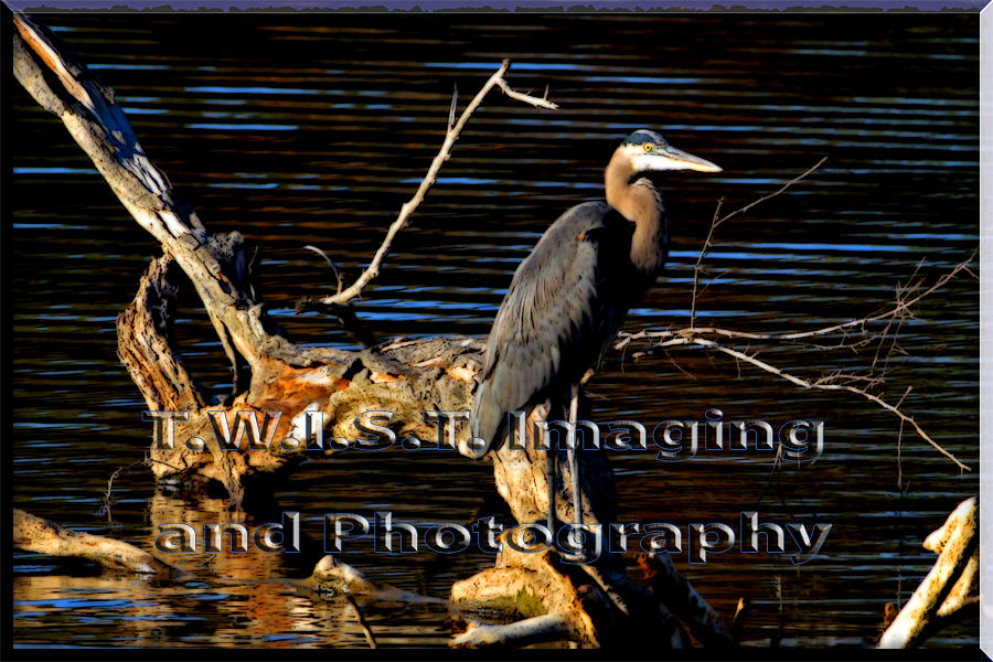 Heron Glow With Twist Photograph by Alan Skonieczny