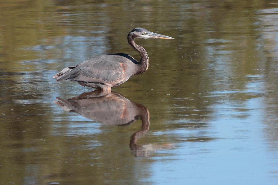 Heron by John Moyer