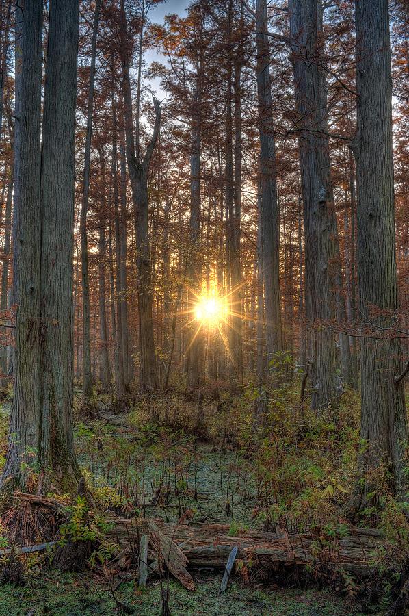 Illinois Photograph - Heron Pond Sunrise by Steve Gadomski