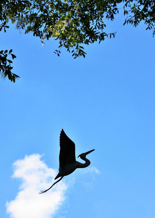 Heron Silhouette by Kristin Elmquist