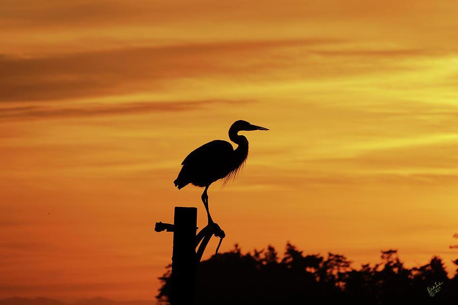 Bird Photograph - Heron Sunrise by Rick Lawler