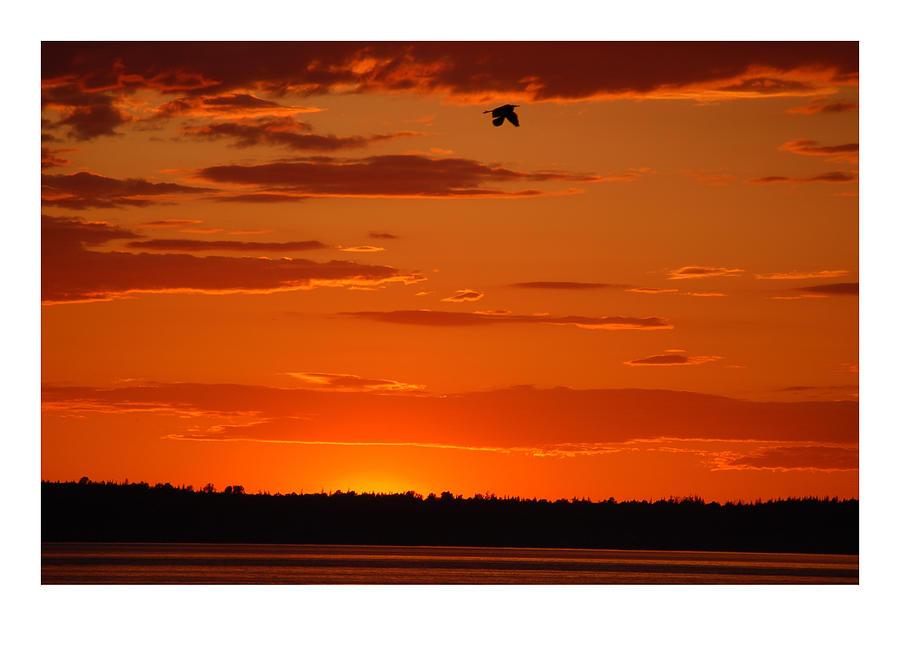 Sunset Photograph - Heron Sunset by J D Banks