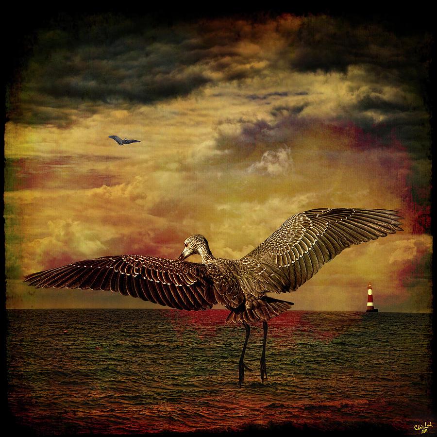 Heron Photograph - Herons by Chris Lord