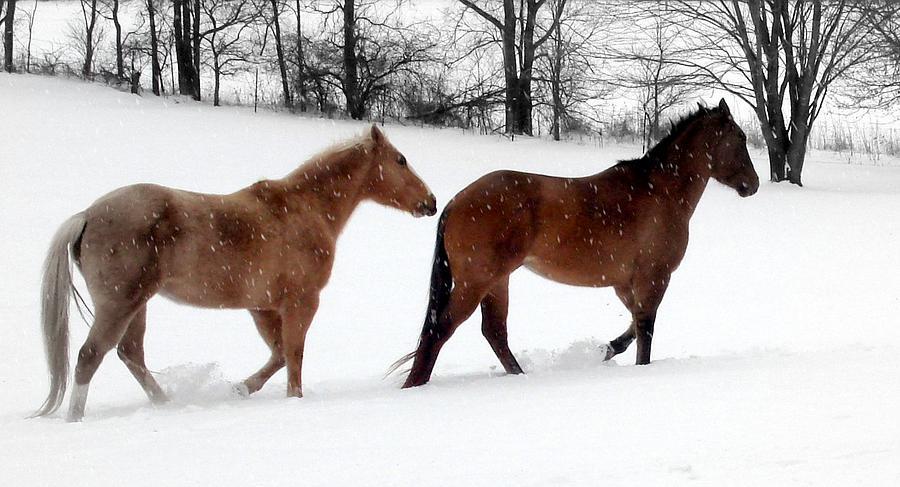 Horse Photograph - Hestar I Snjo by Scot Johnson