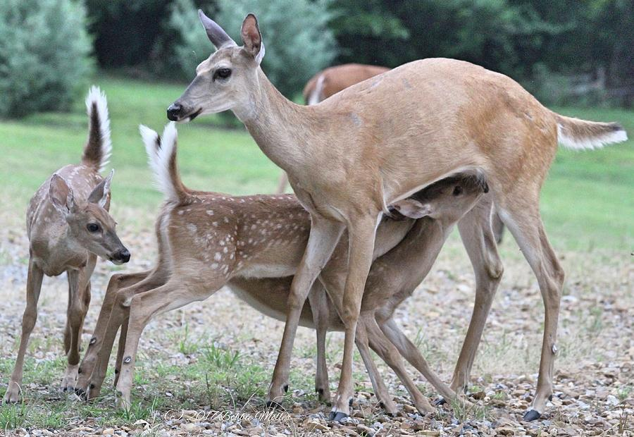 Deer Photograph - Hey, Can I Have Some? by Bobbie Moller
