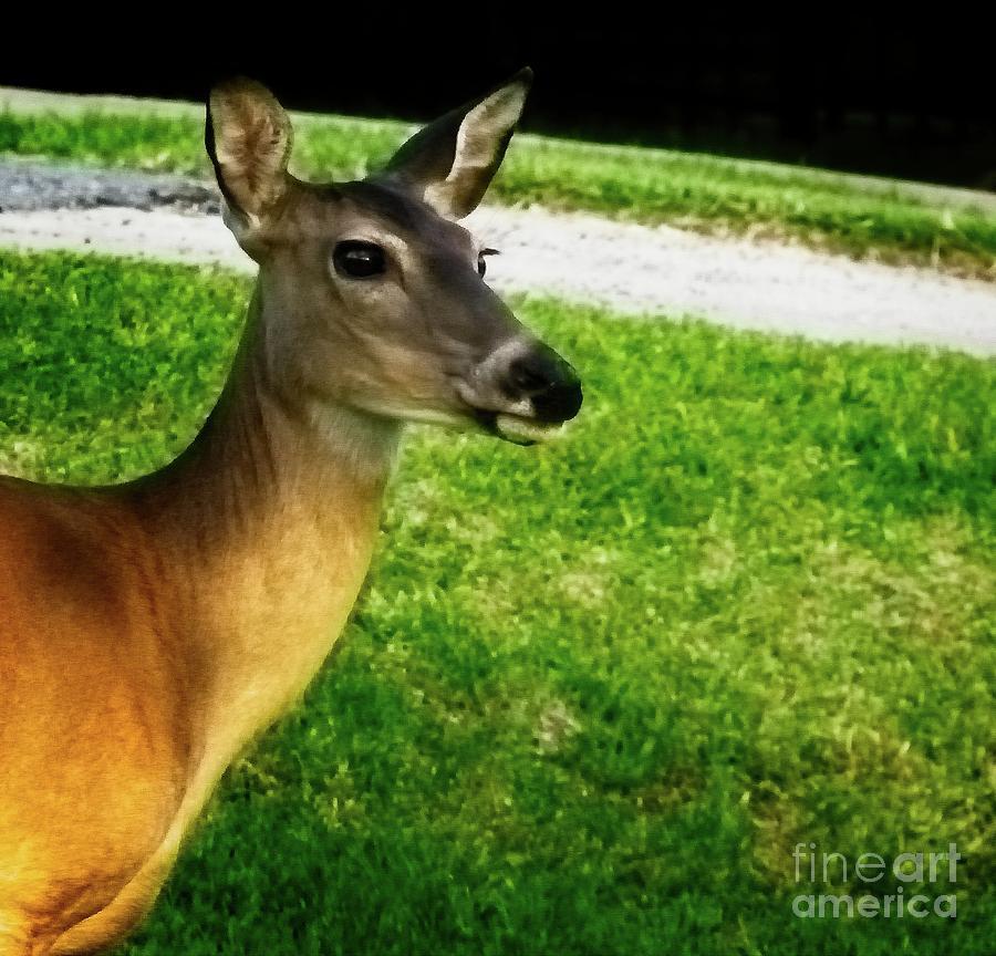 Hi Deer by JB Thomas