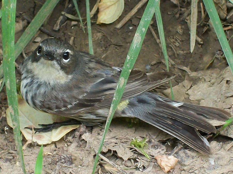 Bird Photograph - HI by Michael Lambert