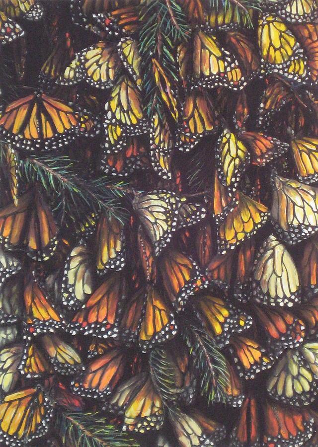 Butterflies Pastel - Hibernating Monarchs by Sam Pearson