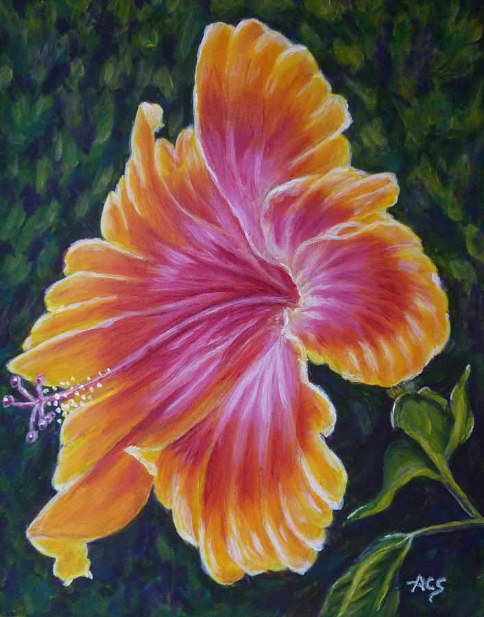 Hibiscus by Amelie Simmons