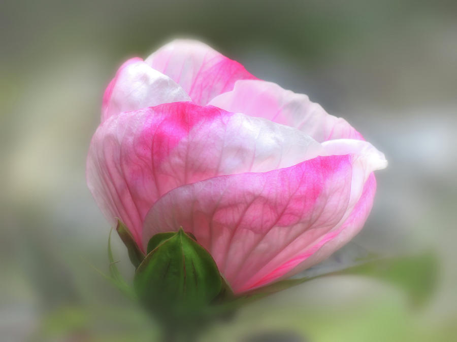Hibiscus Blur by MTBobbins Photography