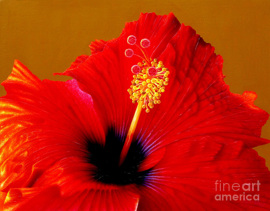 Flowers Painting - Hibiscus by Jurek Zamoyski