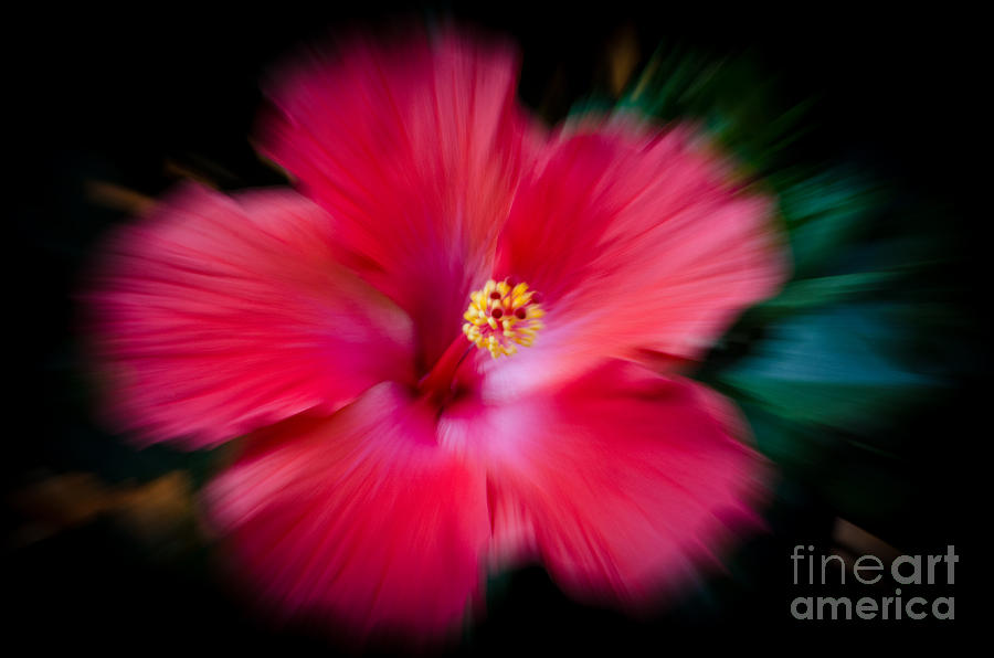 Hibiscus Photograph - Hibiscus With A Twist by Debra Martz