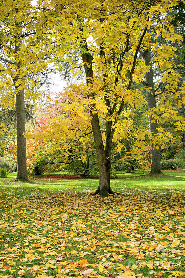 Autumn Photograph - Hickory Autumn by Tim Gainey